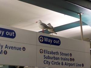 Möwen, sitzend auf einem U-Bahn-Schild