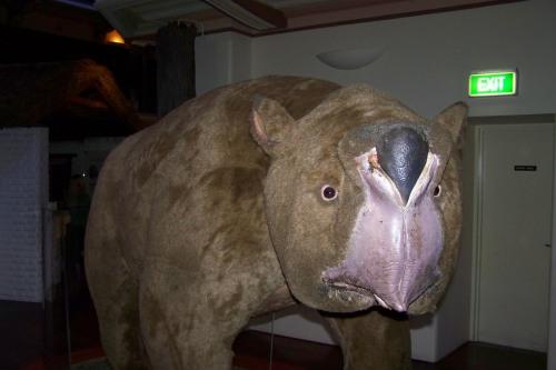 Der leider ausgestorbene Riesenwombat - im Museum of Western Australia zu bewundern