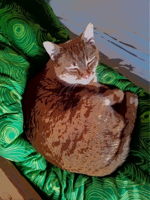 Rothaarige Katze auf grünem Kissen blinzelt verschlafen.